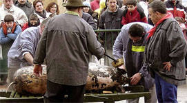 The Ancestral Slaughtering of Pigs in Spain's Soria